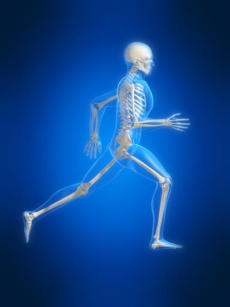 skelett_8_big